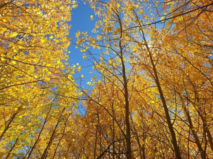 fall-2144507_1920_1024x